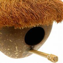Kokosnøtt som hekkekasse, fuglehus å henge, kokosdekorasjon Ø16cm L46cm