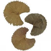 Lotus blader tørket natur tørr dekorasjon liljepute 50stk