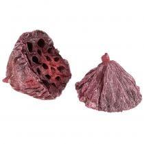 Lotos Mix rød, vasket hvit 25stk