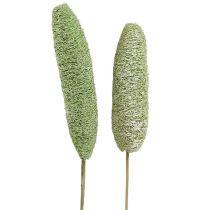 Luffa stor på pinne grønn 25stk