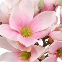 Magnolia haug rosa 40cm 5stk
