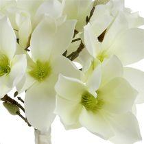Magnolia gjeng hvit 40cm 5stk