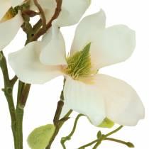 Magnolia fersken 85cm