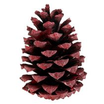 Maritima kjegler 10-15cm rød frostet 12stk