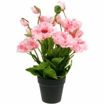 Orientalsk valmue, kunstig blomst, valmue i rosa gryte