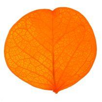 Moneta etterlater aprikos 50g