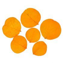 Moneta etterlater gylden gul 50g