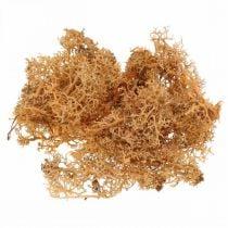 Dekorativ mos for kunsthåndverk Oransje farget naturlig mos konservert 40g