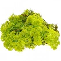Dekorativ mos lysegrønn reinsdyrmos bevart kunsthåndverksmateriale 400g