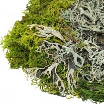 Dekorativ mos til håndverk Mos og lav blander grønt, grått 100g