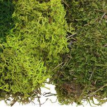 Dekorativ mos for håndverk bland grønn, lys grønn naturlig mos 100g
