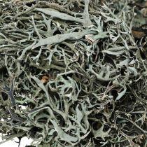 Dekorative kvister Kvister Mosekvister Lichen Naturdeko 750g