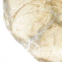 Stranddekorasjoner, Capiz-skjell 5–10 cm, naturlige gjenstander, perlemor, maritim 1 kg