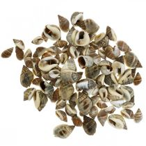 Naturlig dekorasjon, snegleskall naturlig 1–2cm, skalldekorasjon 1kg