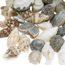 Deco snegleskall mini naturblanding maritim dekorasjon 1kg