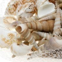 Blåskjellblanding og snegleskall i et naturlig nett 400g