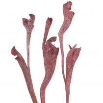 Natraj gevirvedblanding rød, hvitvasket 10stk