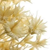 Tørket blomsterfrøpute Svart spidskommen bleket 80g