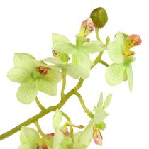 Orchid 97cm lysegrønn