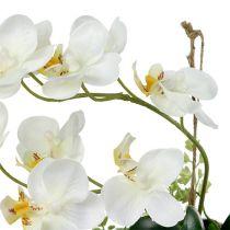 Orchid Phalaenopsis for å henge H26cm krem