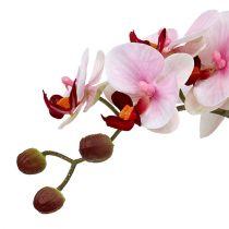 Orkidérosa i keramisk gryte 31cm