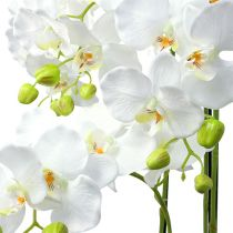 Orkidéhvit med kloden 110cm