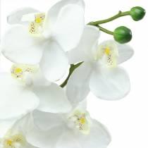 Orkidehvit 77cm