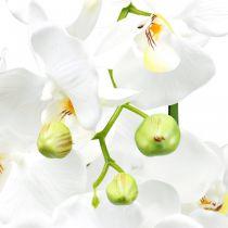 Kunstige orkideer til den hvite potten 80cm