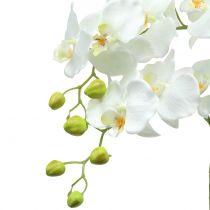 Orkidé hvit på jordkule 65cm