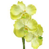 Orkide med røtter lysegrønn L43cm