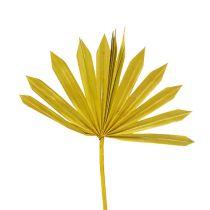 Palmspear Sun mini gul 50stk