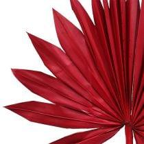 Palmspear Sun mini rød 50p
