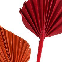 Palmspear assortert rød / oransje 50stk