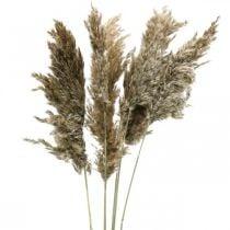 Tørket pampasgress naturlig For tørking av bukett 70-75cm 6stk