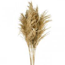 Pampas gras tørket naturlig tørr blomster 75 cm bunt med 10 stk