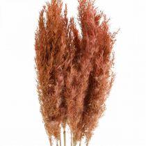 Pampas gress tørket rosa tørre blomster 75 cm bunt med 10 stk
