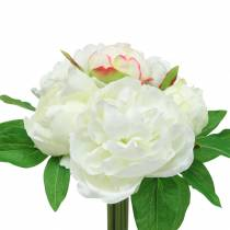 Peon haug hvit / rosa 27cm 6stk