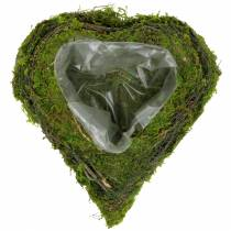 Plant hjertevintre, mose 22cm x 20cm H7cm