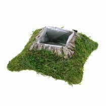 Plantepute mose, bark 20cm × 20cm