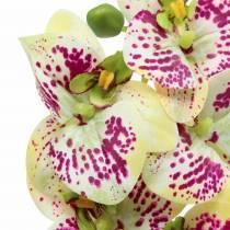 Kunstig orkidégren Phaelaenopsis Grønn Rosa H49cm