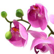 Orchid Phalaenopsis Pink 77cm