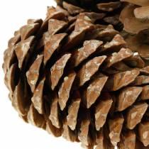 Pinus Pinea stor 14 / 18cm natur 50p