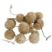 Sycamore frukt vasket hvit 250g
