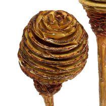 Platyspermum Creme 1-3, 50 hoder