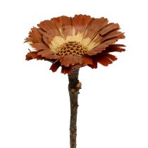 Repens rosettlys 8-9cm 25stk