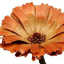Repens rosett naturlig 6-7cm 50p