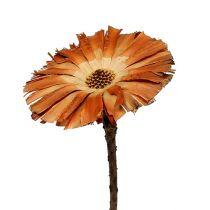 Repens rosett Super 10 - 12cm 250p