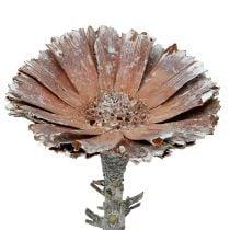 Repens rosett 6-7cm hvitvasket 25stk