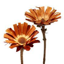 Repens rosett Super 10 - 12cm 20stk