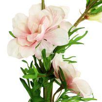 Larkspur Delphinium lys rosa L95cm